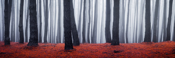 Burned forest in Gumeracha, Adelaide Hills