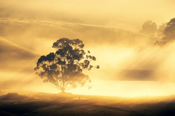 Fog near Kersbrook in the Adelaide Hills