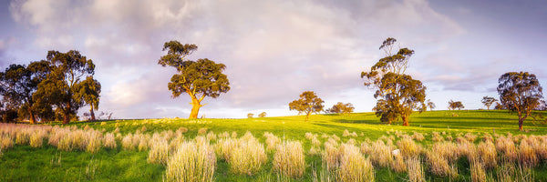 Clare Valley in South Australia