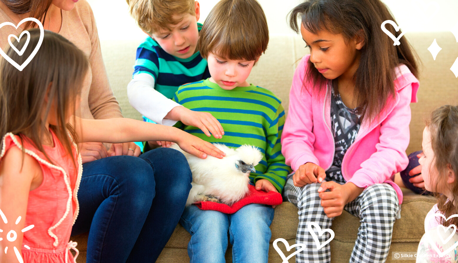 children playing with white silkie chicken on a little boy's lap