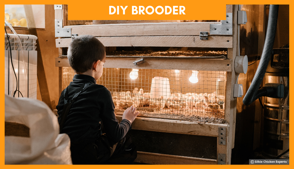 diy brooder for baby silkie chickens