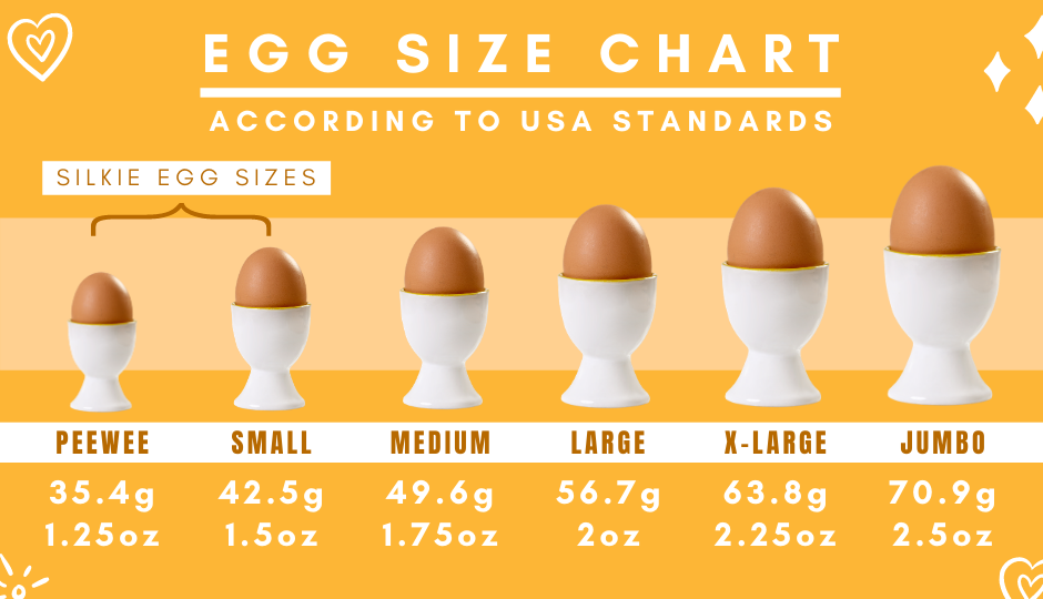 Egg size comparison chart according to American standards