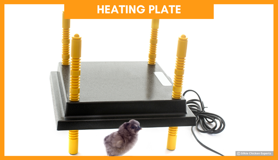 heating plate for silkie chicks