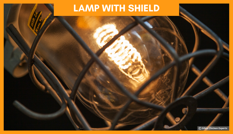lamp with shield for baby silkie chickens