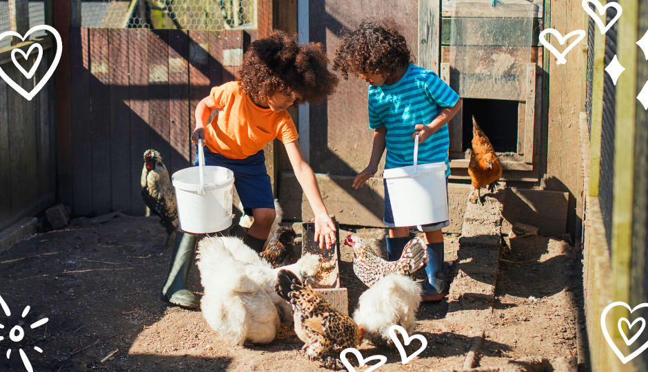 little boys feeding white silkie chickens and jungle fowl chickens