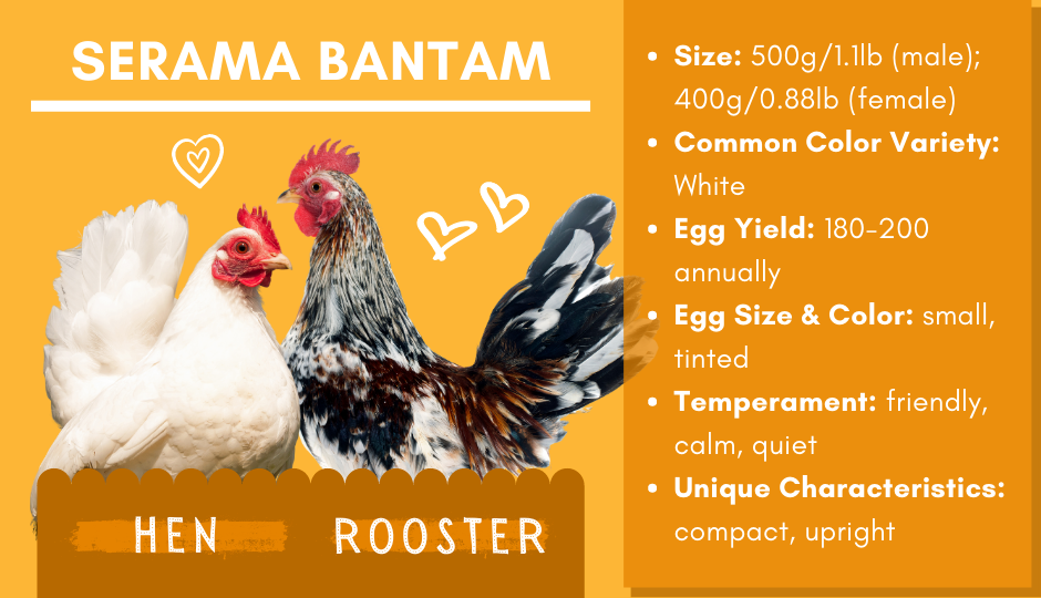 Serama bantam chicken and rooster facts chart