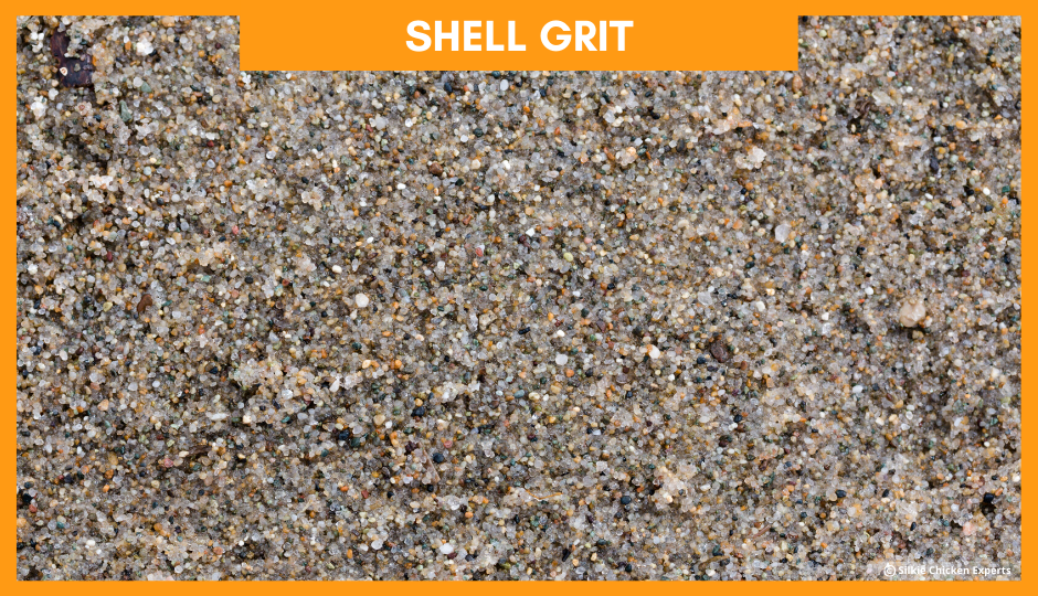 shell grit for baby silkie chickens