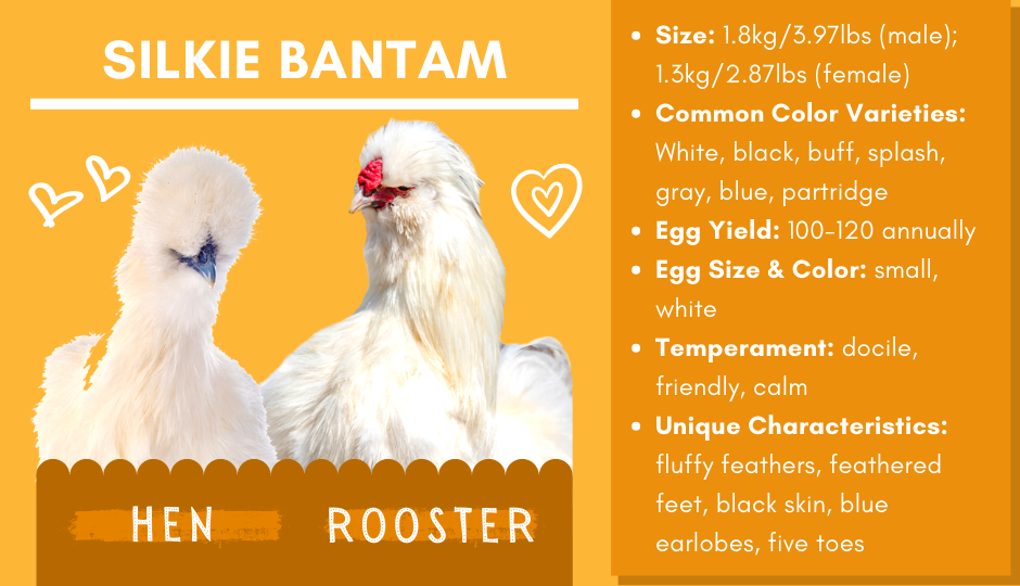 Silkie bantam chicken and rooster facts chart