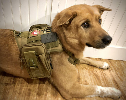 Mil-Spex Tactical K9 dog harness and pack
