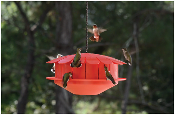 Humm-Bug Bird Feeder