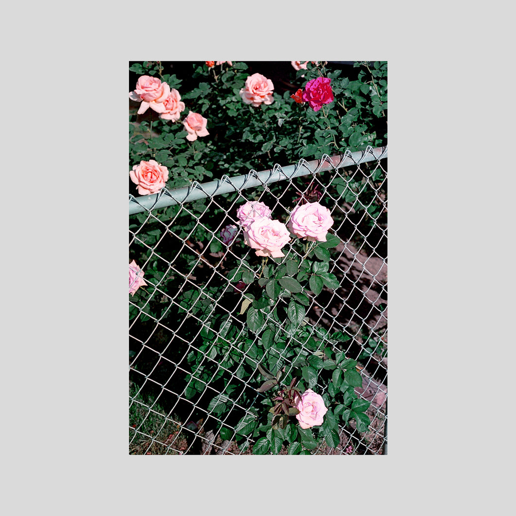 FENCE FLOWERS / EDDIE O'KEEFE