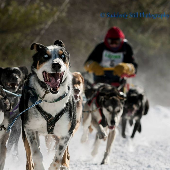 Eden Ethical Dogsledding in Vermont