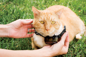 Sistema antifuga In-Ground Cat Fence™ con filo deluxe per gatti