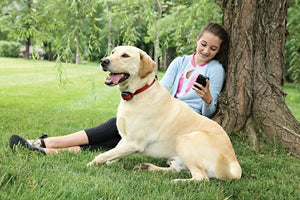 Collare ricevitore aggiuntivo per cani ostinati Add-A-Dog® per sistema antifuga senza fili Stay+Play Wireless Fence™