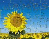 Sunflower Bees Puzzle - frecklebox