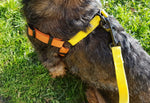 Load image into Gallery viewer, Dachshund Harness & Leash
