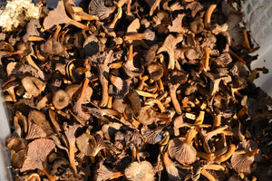 Dried Winter Chantrelles 50g