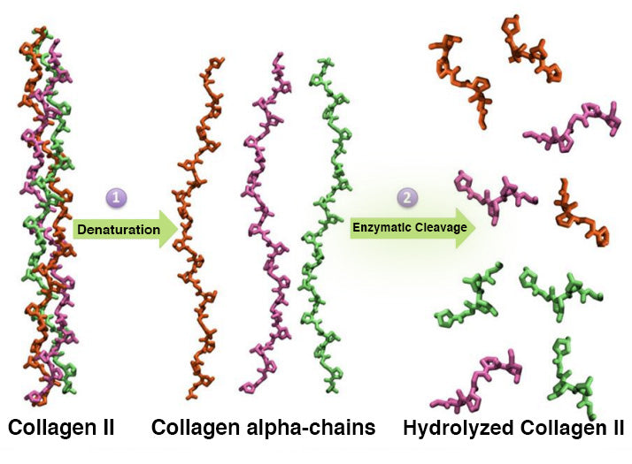 hydrolyzed collagen II