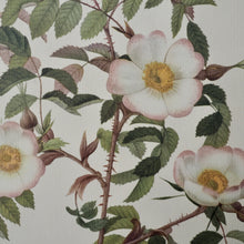 Load image into Gallery viewer, LARGE BOTANICAL  BOOK PLATE - ROSA REDUTEA GLAUCA
