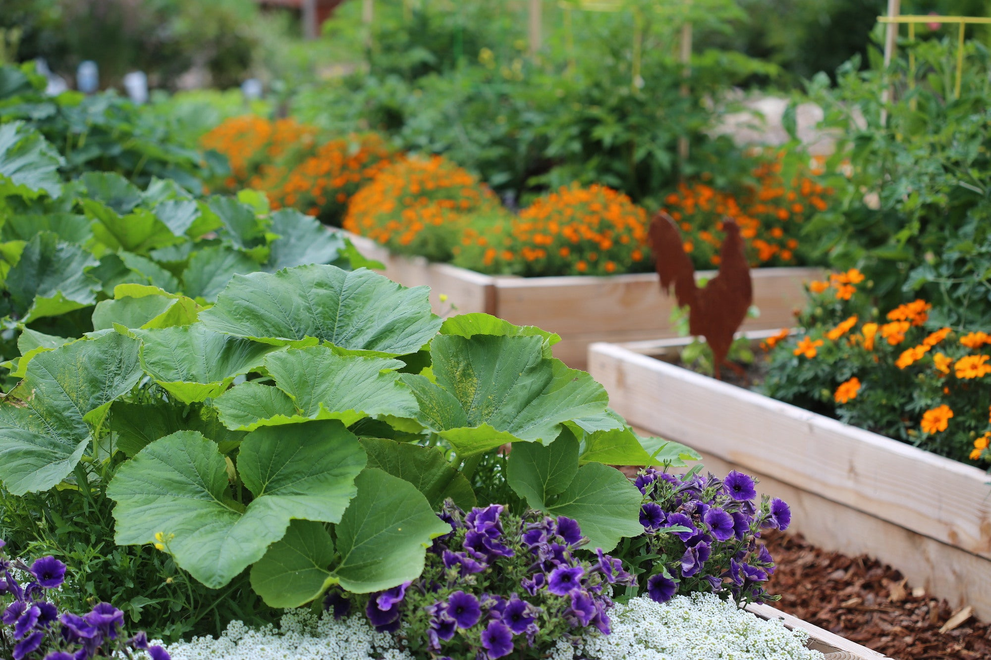 Plant Vegetables, Flowers or Both?
