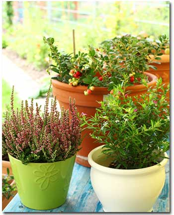 Special Care for Container Plants
