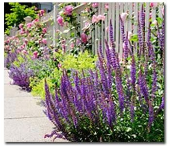 8 Perfect Sidewalk Plants