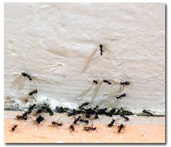 How to Control Ants
