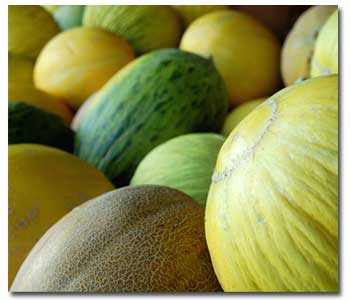 growing-melons