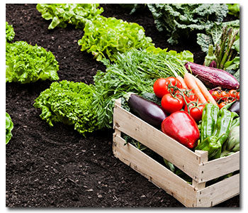 What Vegetables to Plant