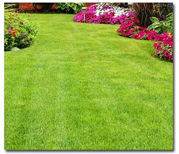 August Lawn Care