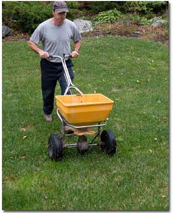 Reseed for Revival of Stressed Out Lawns