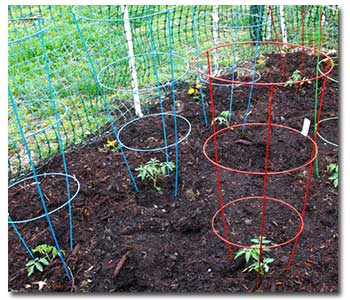 tomato-cages