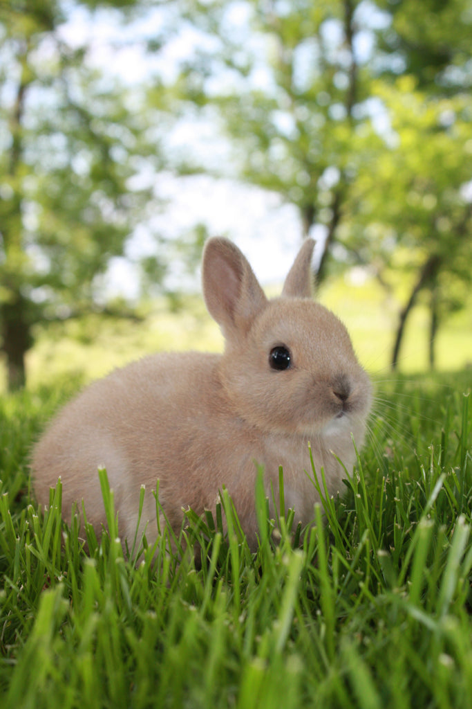 Befriending Your Bunny: The First Steps