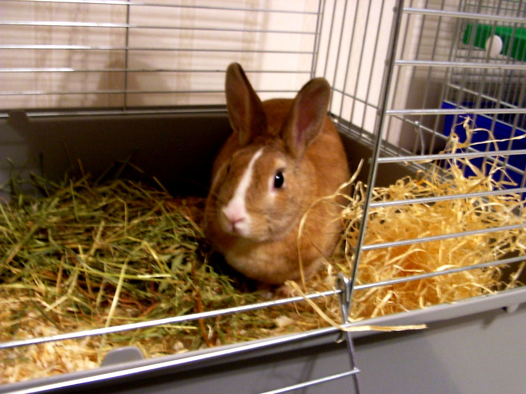 Cleaning Out Your Rabbit's Hutch