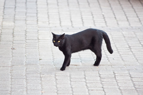 black cat means bad luck