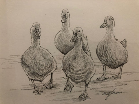 Duck Quartet - Framed Pencil Sketch