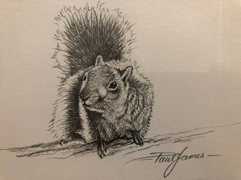 Squirrel - Framed Pencil Sketch