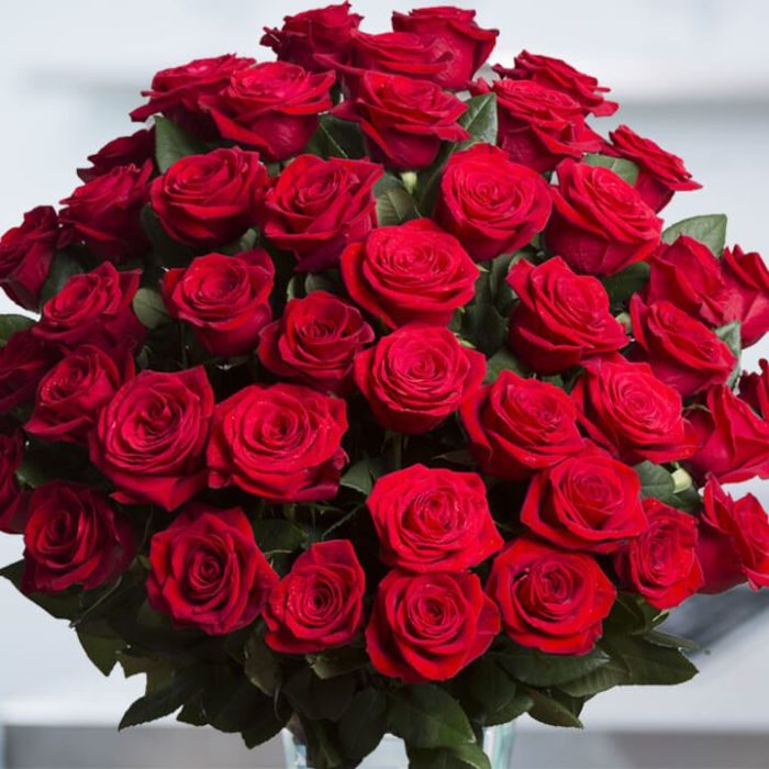Large Columbian Red Roses