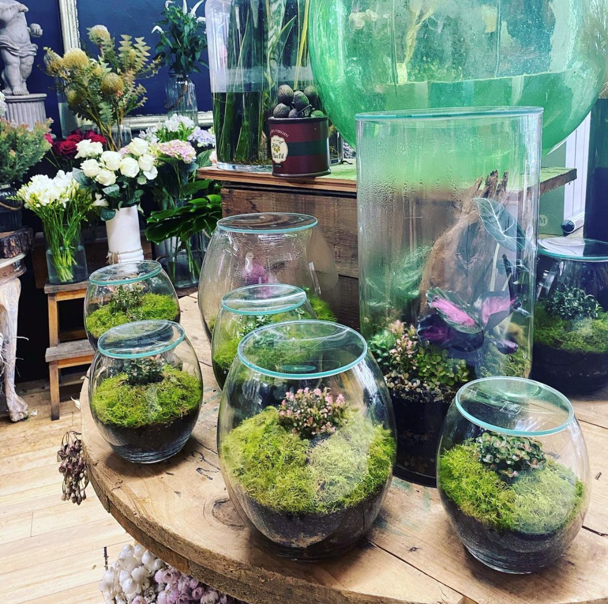 Forest Life Terrariums
