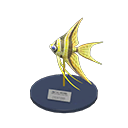 Angelfish Model