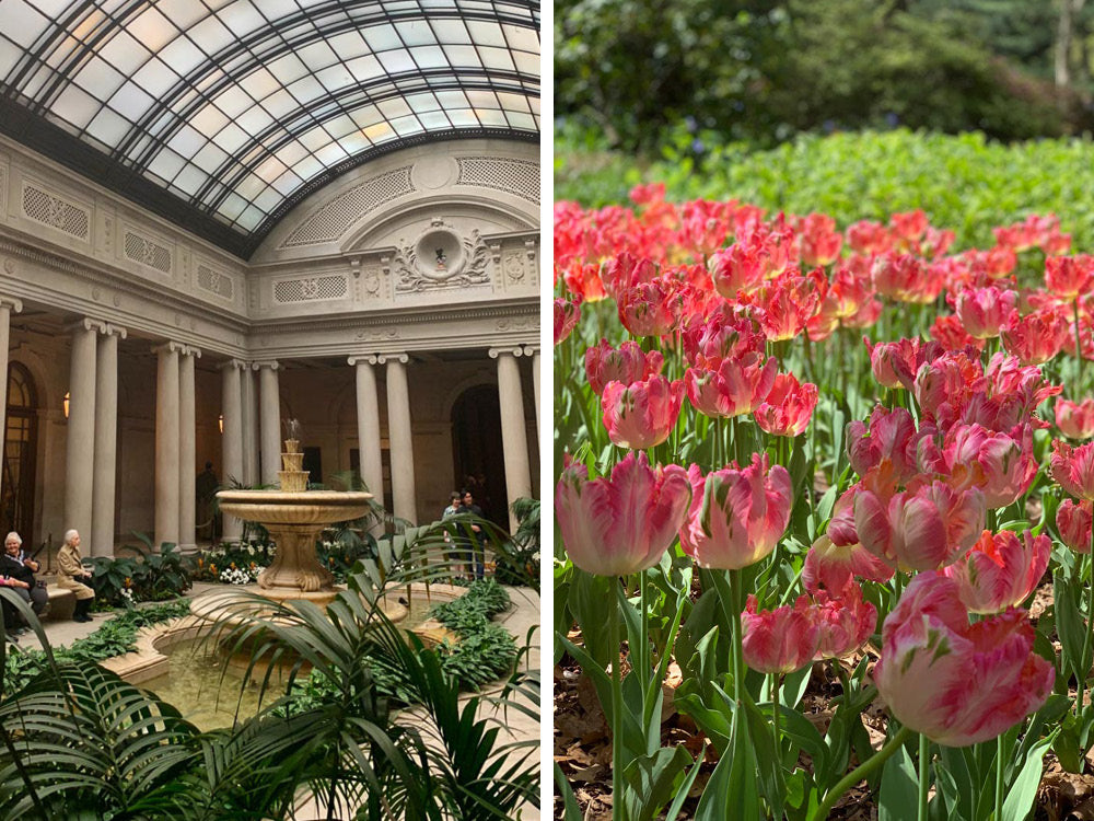 Notey in NYC Frick Collection and Central Park Tulips