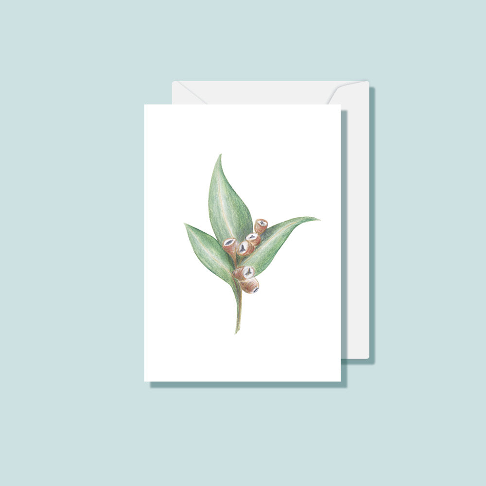 Botanical Card Set (Box of 10)