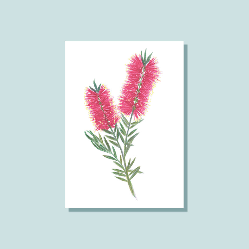 Notely Gift Cards Bottlebrush