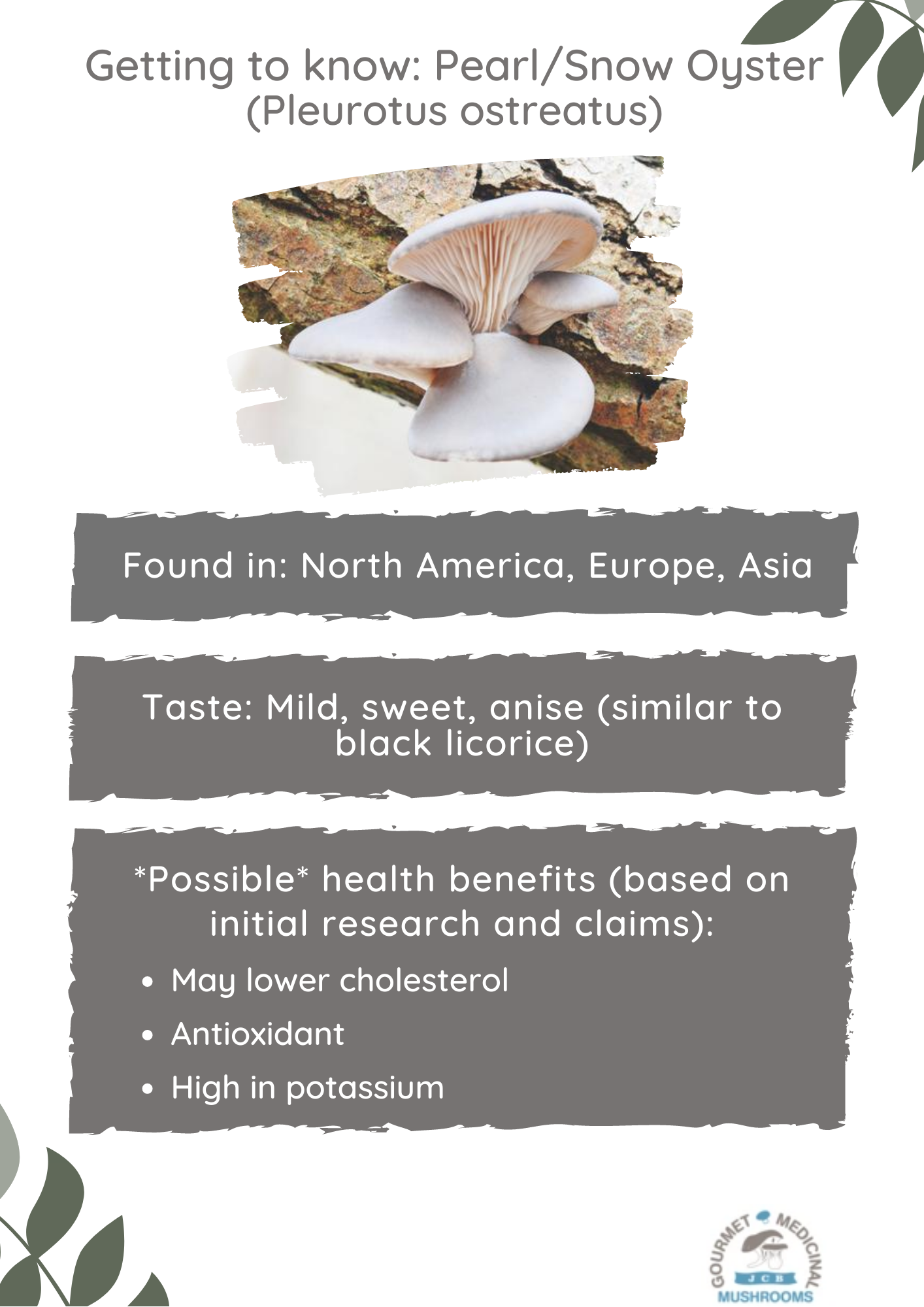 Getting to know - Pearl Oyster Mushrooms