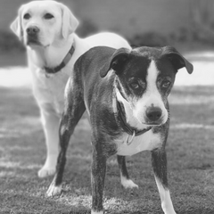 Picture of Duke and Georgie