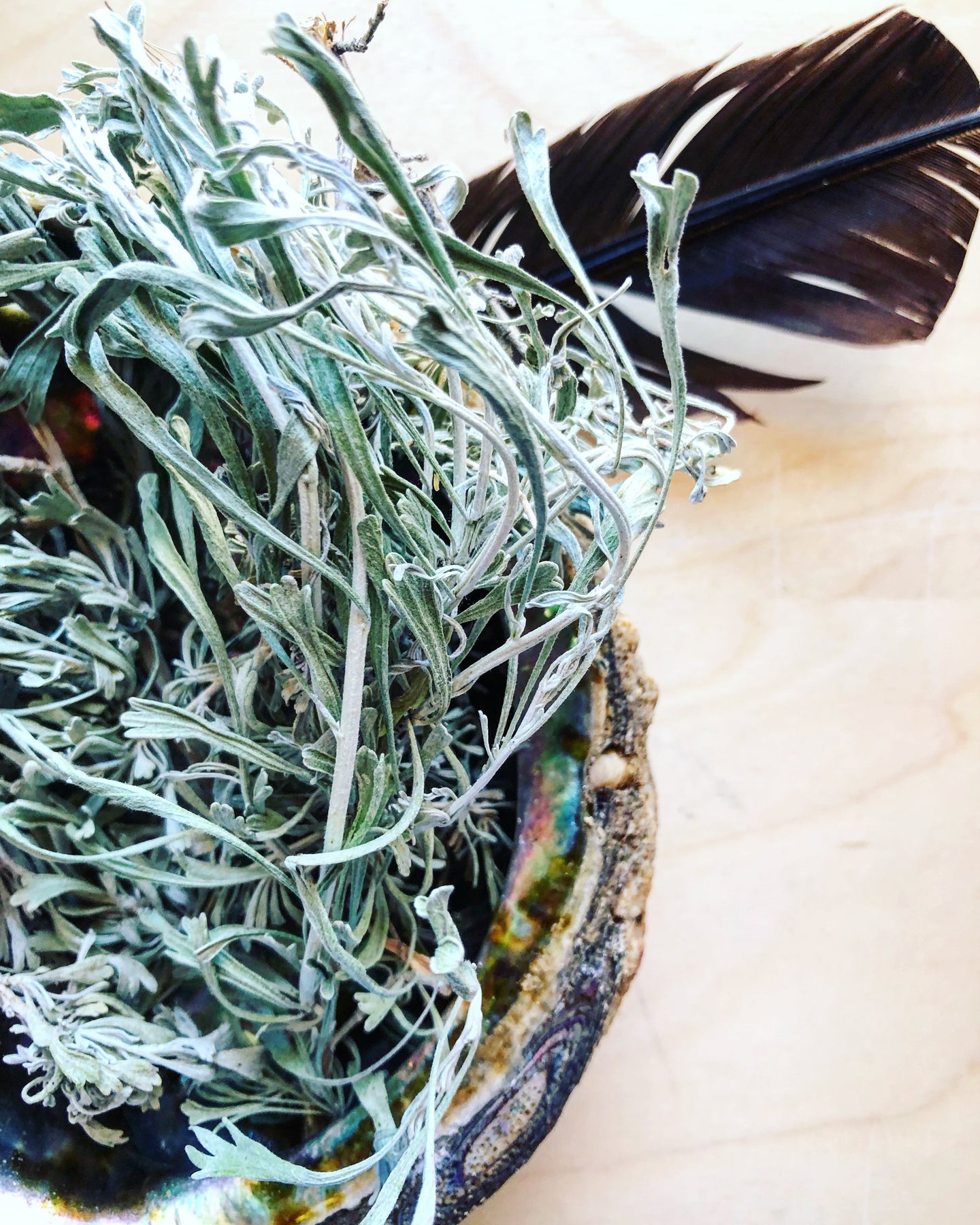 Sage in Abalone | Smudge + Cleansing