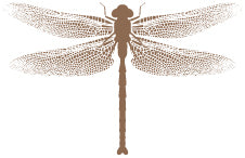 Lake Hayes Dragonfly
