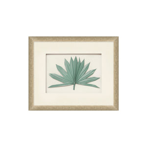 Framed Palm Fronds