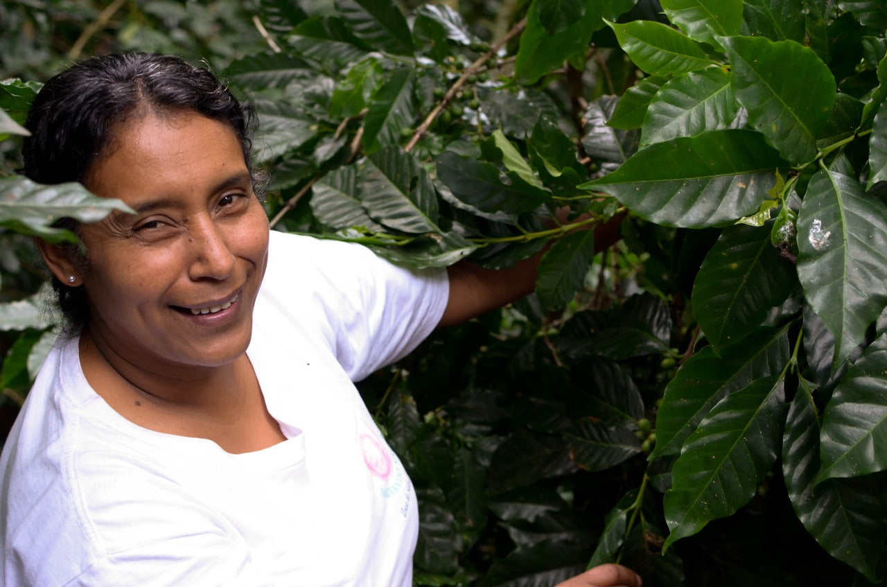 Chica holding coffee plant