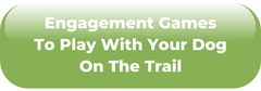 Engagement Games To Play With Your Dog On The Trail